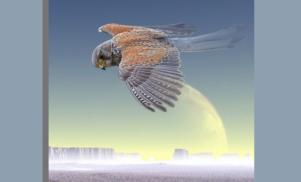 Listen to Scientific Dreamz Of U's cosmic single from his falcon-inspired split-LP on 1080p