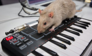 Some ASU students made rats play synthesizers, and it sounded like something on Tri Angle