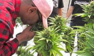 """Cam'ron developing """"grape soda-flavored"""" weed strain"""