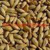 Organic Grain Wanted  - Grain & Seed