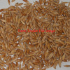 Good Feed Oats Wanted - Grain & Seed