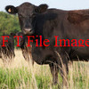 Wanted Organic Agistment Local/Interstate - Livestock