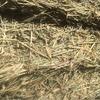 185 Bales Wheaten hay For Sale Ex Farm in 8x4x4's