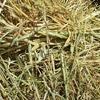 350 rolls of Oaten Hay