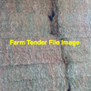 Vetch Clover Hay 8x4x3 B-Double Load