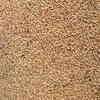 Barley F2 100 ton
