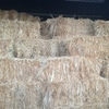 Rye & Clover hay - small square bales