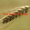 200/mt of F1 Barley - Grain