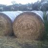 100 rolls last seasons pasture hay
