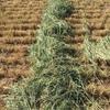 Wheaten Hay For Sale