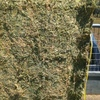 First Cut Lucerne in 8x4x3's For Sale