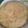 Oaten Hay for Sale Delivered in Rolls
