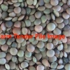Lentil offal or equivalent for pig feed wanted