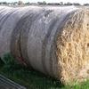 Round oaten hay bales
