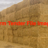 Windrowed Wheaten Straw For Sale in 8x4x3's, 200 of - Hay