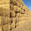 Header trail Barley straw, from frosted crops, ex farm