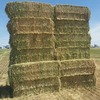 200 Bales of New season oaten hay