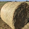 330 Rolls Barley and Rye Hay For Sale Ex Farm