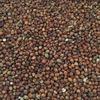 180mt Sorghum For Sale Ex Farm or Del - Grain & Seed