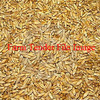 120mt Triticale For Sale Delivered - Grain & Seed