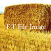 For Sale Straw in 8x4x3's - Hay