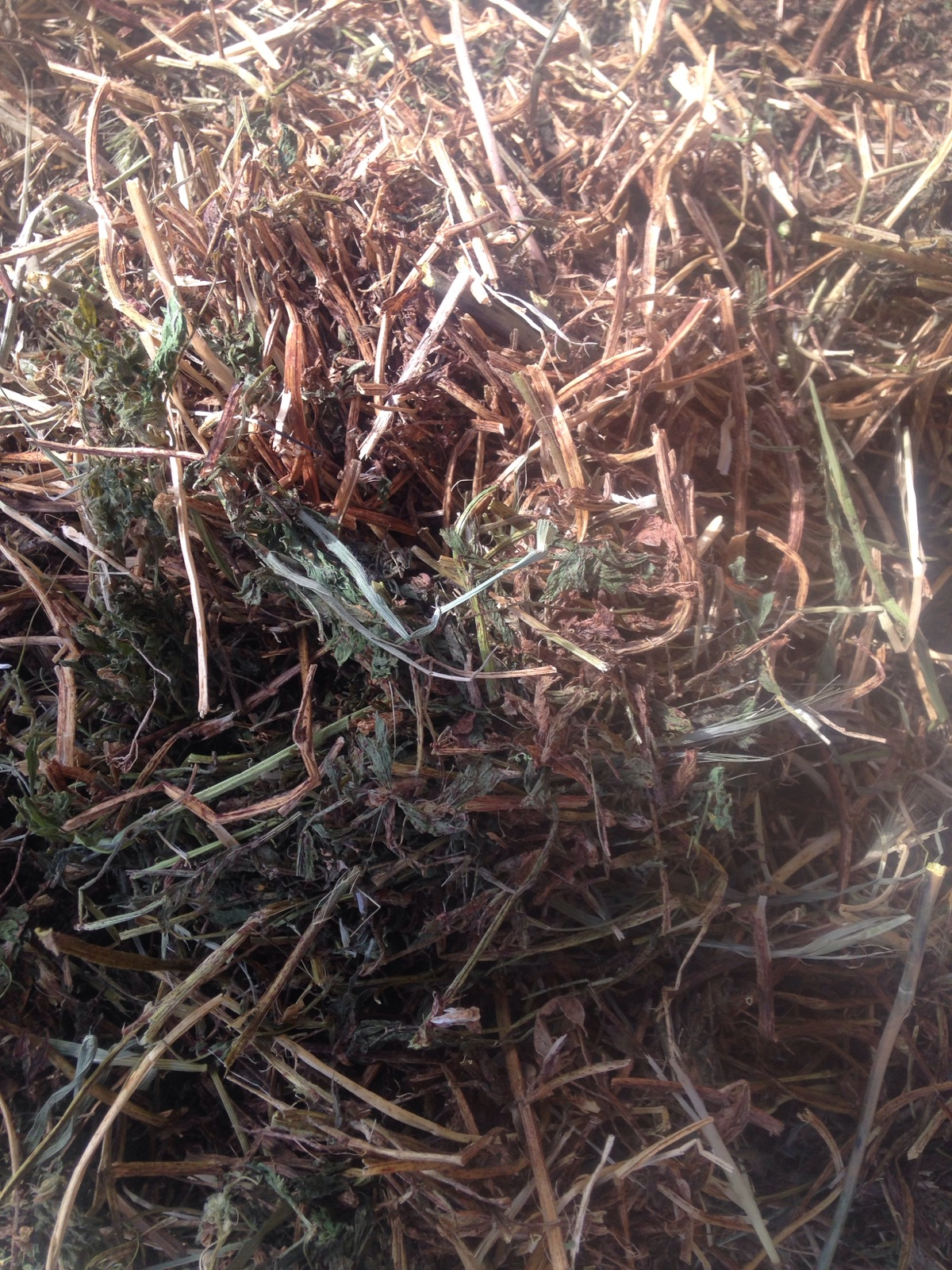 hairy vetch hay for sale