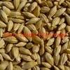 F3 Barley 250 tonne ex farm
