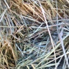 Sub Clover & Rye Hay For Sale in 8x4x3's