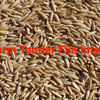 Forage / Hay Oats Seed Wanted 30mt Bulk - Grain