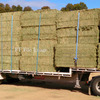 Vetch hay in 8x4x3's Good Stock 500kgs - Hay