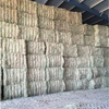800mt New Season Barley Hay for sale in 8x4x3's Avail Now! Feed Tested