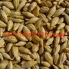 A B-Double of F1 Barley Wanted Ex Farm Round Berrigan - Coolamon - P/Up Fri 15/7/16 - Grain & Seed