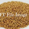 26mt ASW1 Wheat for Sale Ex farm or Delivered - Grain & Seed