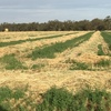 Oaten & Clover Hay For Sale in 8x4x3's