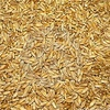 60/mt of Berkshire Triticale For Sale - Grain & Seed