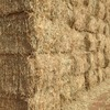 Wheaten Hay For Sale in 8x4x3's New Season
