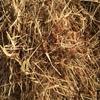 Oaten / Balansa Hay Rolls For Sale
