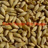 137.59/mt of C01 Barley Warehoused - Grain