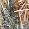 300 Bales Export Oaten Hay in 8x4x3's For Sale