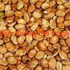 Old Season Beans Wanted - Grain & Seed