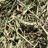 Wheaten Hay For Sale in 8x4x3's