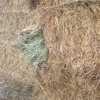 Pasture Hay in 8x4x3's For Sale  - Hay