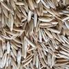 30mt Graded Yarran Oats For Sale - Grain & Seed