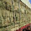 For Sale Small Squares Lucerne Hay - Hay