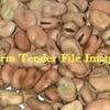 2,000mt New Season Fiesta Faber Beans For Sale Off header