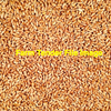 200/mt of Revenue Red Wheat - Grain & Seed