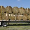 For Sale Trit Hay Rolls 5x4 - Hay
