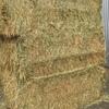 Wheaten Hay  8x4x3 500 m/t x 625 KG Bales Approx & Shedded.