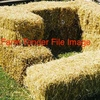 For Sale Pea Straw in Small Squares - Hay