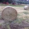 Hay pasture 4x4 rounds